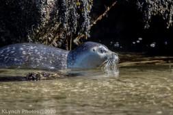 Seal_136