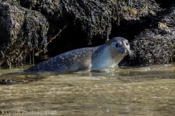 Seal_138