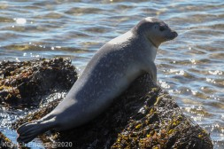 Seal_14