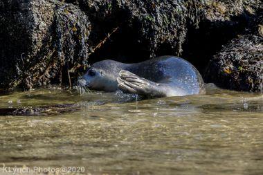 Seal_141