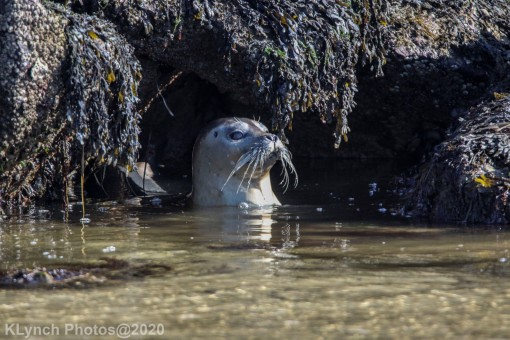 Seal_143