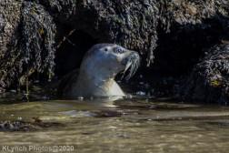 Seal_144