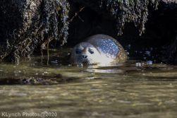 Seal_145