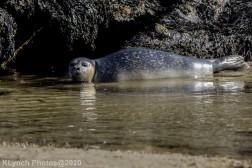 Seal_148