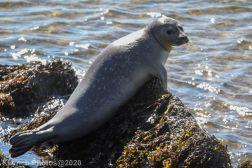 Seal_15