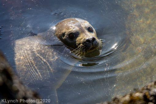 Seal_151