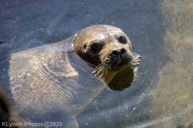Seal_153
