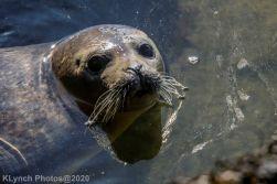 Seal_155
