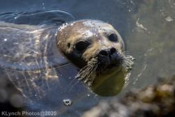 Seal_156