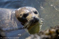 Seal_157