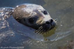 Seal_158