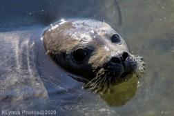 Seal_159