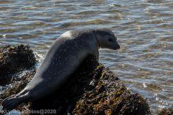 Seal_16
