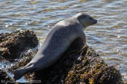 Seal_17