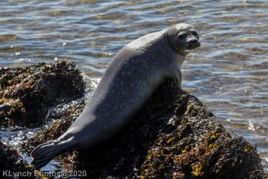 Seal_21