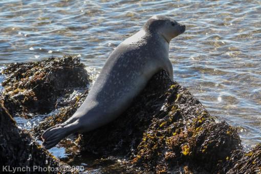 Seal_22