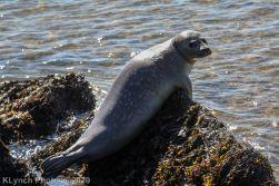 Seal_23