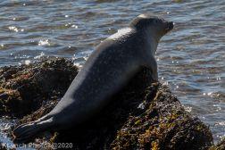 Seal_25
