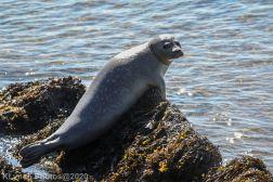 Seal_26