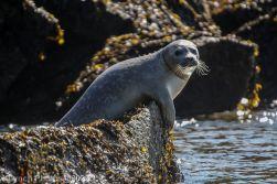 Seal_28