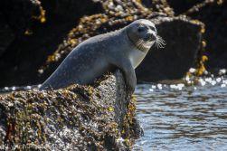 Seal_29