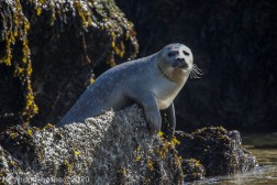 Seal_34