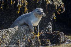 Seal_35