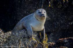 Seal_47