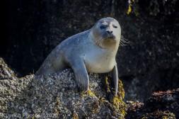 Seal_48