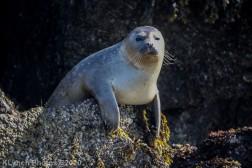 Seal_49