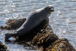 Seal_5