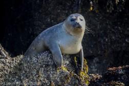 Seal_50