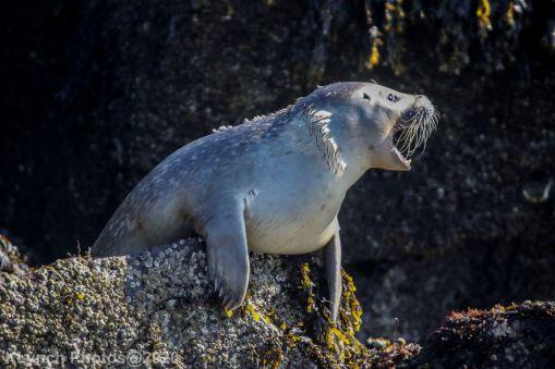 Seal_55