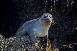 Seal_58