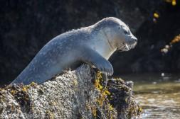 Seal_69