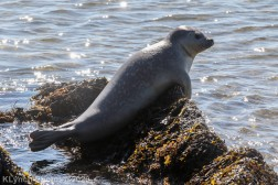 Seal_7
