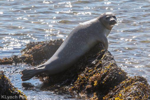 Seal_8