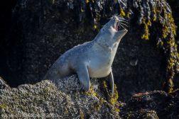 Seal_80