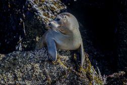 Seal_82