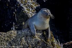 Seal_84