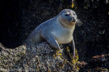 Seal_86