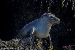Seal_89