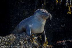 Seal_90