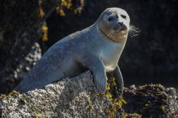 Seal_91