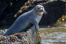 Seal_92