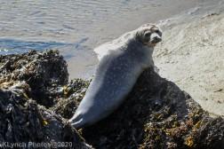 Seal_95