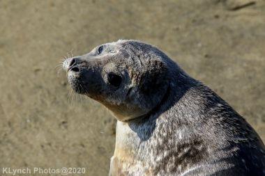 Seal_98