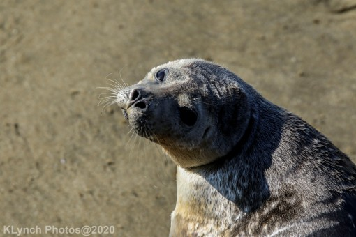 Seal_99