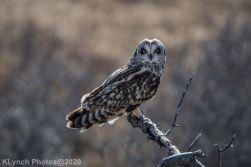 Owl_101
