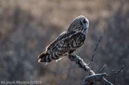 Owl_102